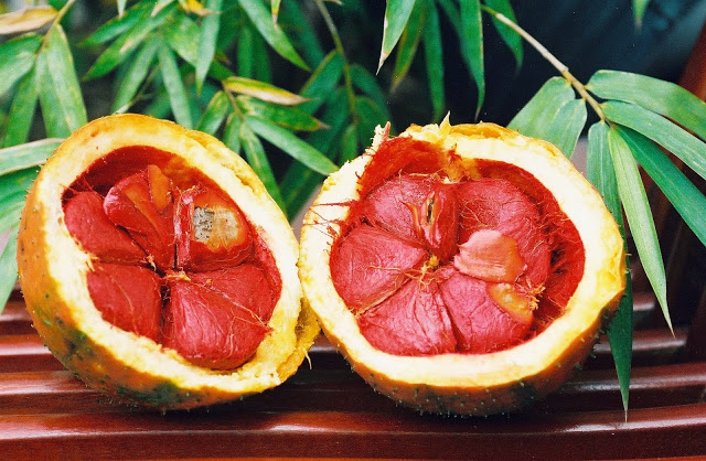 Gac Fruit opened