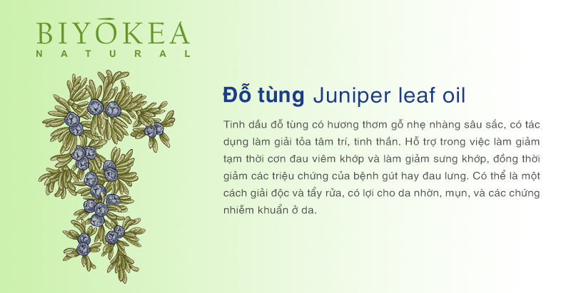juniper leaf do tung